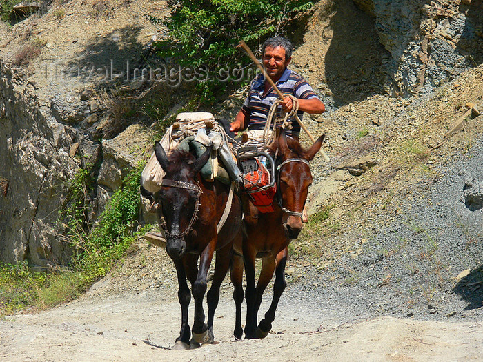 albania167: Drenove National Park, Korçë county, Albania: mule caravan - photo by J.Kaman - (c) Travel-Images.com - Stock Photography agency - Image Bank