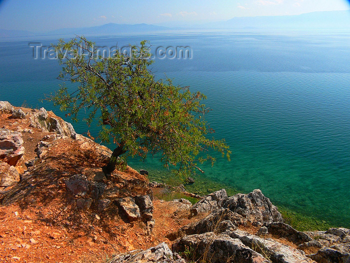albania178: Lin, Pogradec, Korçë county, Albania: view over lake Ohrid - photo by J.Kaman - (c) Travel-Images.com - Stock Photography agency - Image Bank