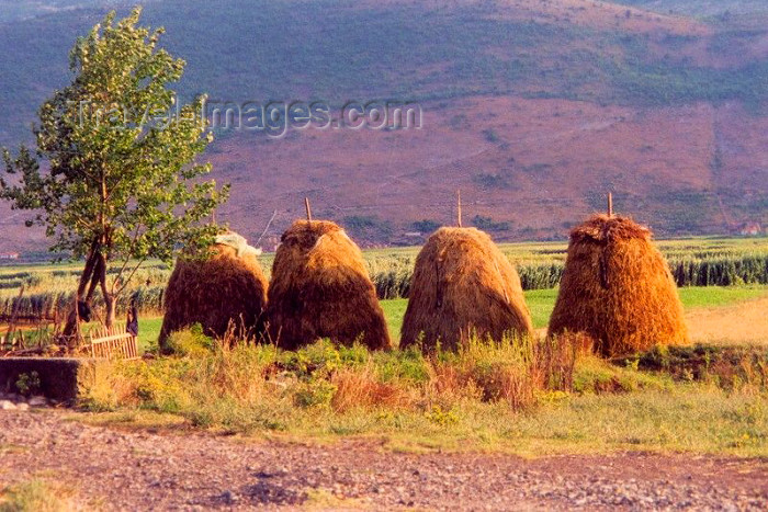 albania7: Albania / Shqiperia - Lezhe: Gheg rural life - haystacks on the road to Tirana - photo by M.Torres - (c) Travel-Images.com - Stock Photography agency - Image Bank