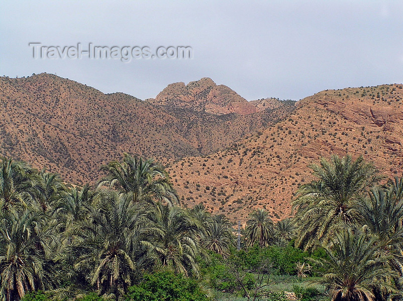 algeria141: Algeria / Algerie - Massif des Aurès - Batna wilaya: palmtrees - photo by J.Kaman - montagnes des Aurès: palmiers - (c) Travel-Images.com - Stock Photography agency - Image Bank