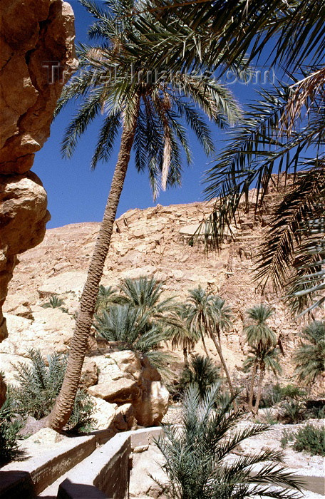 algeria17: Algeria / Algérie - M'Chounech - wilaya de Biskra: palms and dry water canal - photo by C.Boutabba - palmiers et canal d'eau sec - (c) Travel-Images.com - Stock Photography agency - Image Bank