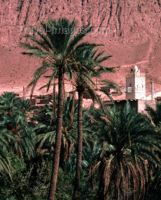 algeria19: Algeria / Algérie - El Kantara - wilaya de Biskra: a minaret in the date orchards - photo by C.Boutabba - minaret dans les plantations de dattes - (c) Travel-Images.com - Stock Photography agency - Image Bank