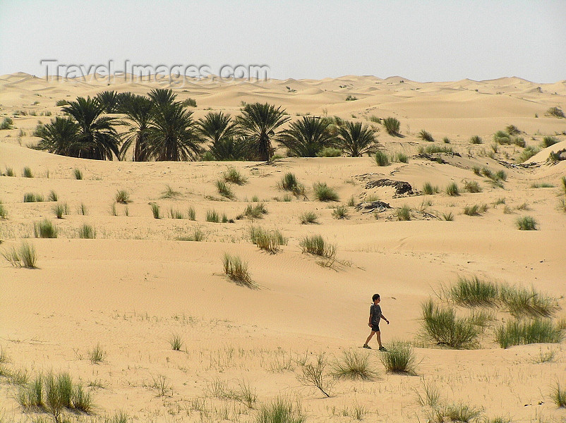 algeria33: Algeria / Algerie - Sahara desert: small oasis - photo by J.Kaman - petite oasis - (c) Travel-Images.com - Stock Photography agency - Image Bank