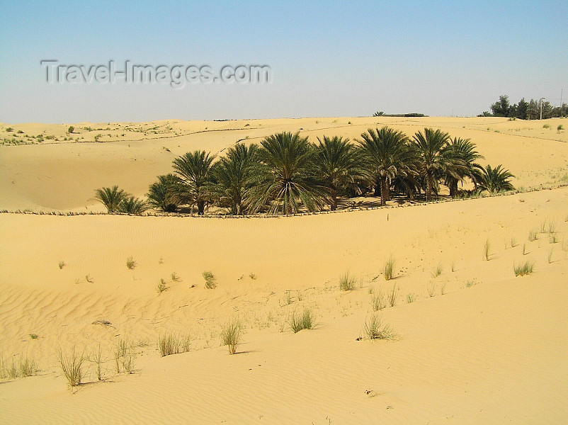 algeria34: Algeria / Algerie - Sahara desert: small oasis - palm trees - photo by J.Kaman - petite oasis - palmiers - (c) Travel-Images.com - Stock Photography agency - Image Bank