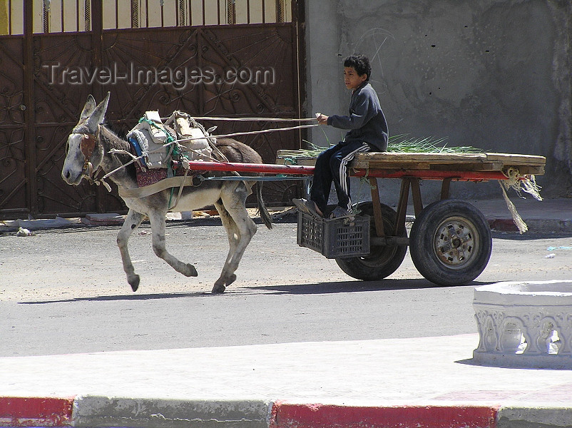 algeria36: Algeria / Algerie - Touggourt - Wilaya de Ouargla: cart with speeding donkey - photo by J.Kaman - chariot avec âne rapide - (c) Travel-Images.com - Stock Photography agency - Image Bank
