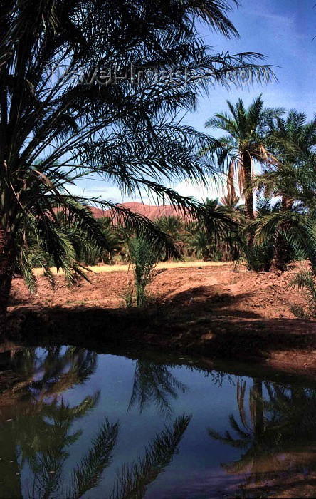algeria4: Algeria / Algérie - Droh - wilaya de Biskra: small pond in the oasis - photo by C.Boutabba - petit lac dans l'oasis - (c) Travel-Images.com - Stock Photography agency - Image Bank