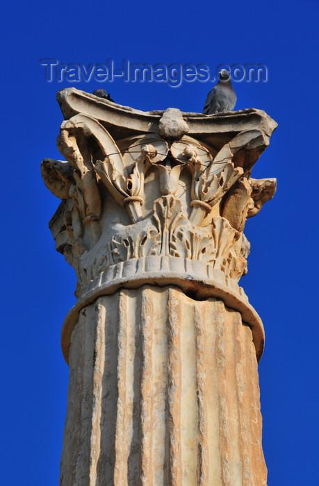 algeria436: Cherchell - Tipasa wilaya, Algeria / Algérie: Roman Square - Roman column - Corinthian order   Place Romaine - colonne romaine - ordre corinthien - photo by M.Torres - (c) Travel-Images.com - Stock Photography agency - Image Bank