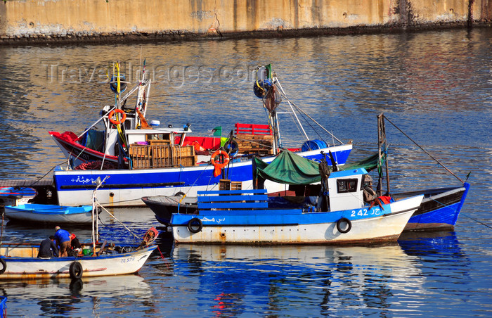 algeria497: Algiers / Alger - Algeria / Algérie: fishing vessels - fishing harbour| bateaux de pêche - Môle de Pêche - Pêcherie - photo by M.Torres - (c) Travel-Images.com - Stock Photography agency - Image Bank