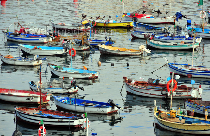 algeria505: Algiers / Alger - Algeria / Algérie: small boats - fishing harbour| petits bateaux - Port de Pêche - photo by M.Torres - (c) Travel-Images.com - Stock Photography agency - Image Bank