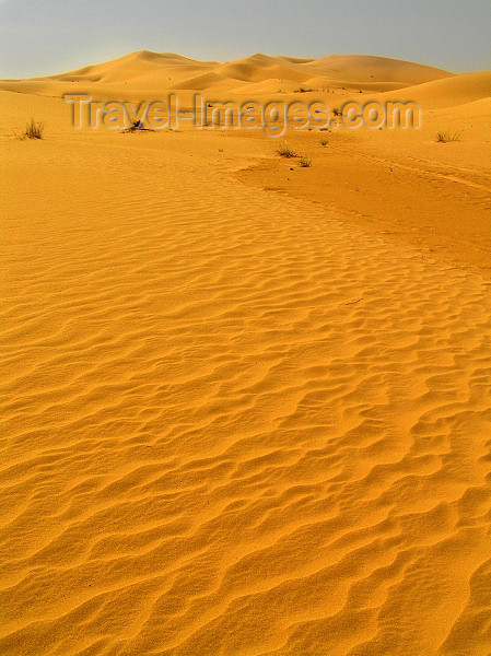 algeria53: Algeria / Algerie - Sahara desert: sand dunes - photo by J.Kaman - dunes de sable - (c) Travel-Images.com - Stock Photography agency - Image Bank