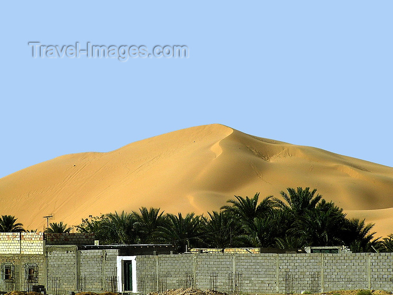 algeria56: Algeria / Algerie - Sahara desert: sand dune and palms - photo by J.Kaman - dune et palmiers - (c) Travel-Images.com - Stock Photography agency - Image Bank