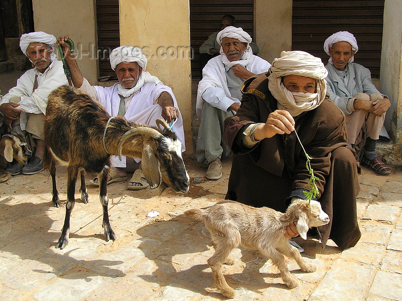 algeria76: Algeria / Algerie - M'zab - Ghardaïa wilaya: at the market - goats - Ghardaia - photo by J.Kaman - au marché - chevres - (c) Travel-Images.com - Stock Photography agency - Image Bank