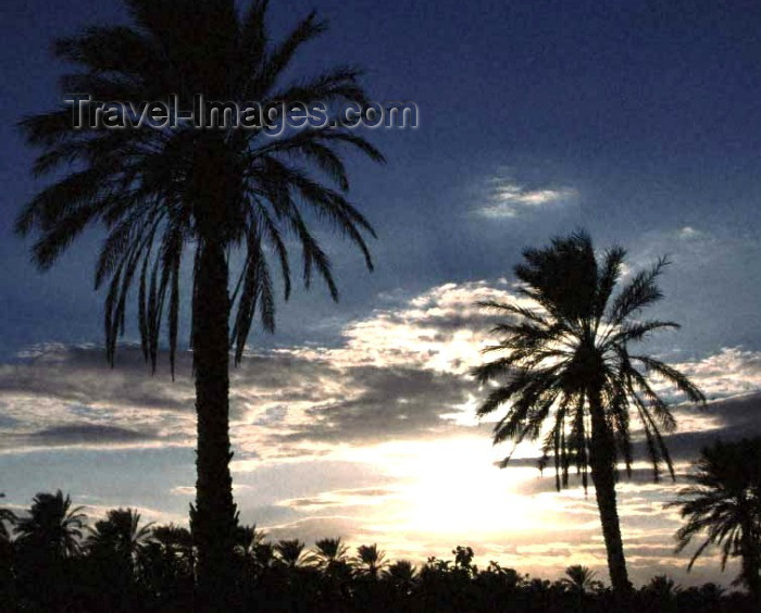 algeria9: Algeria / Algérie - Biskra: Sunset and palm trees - photo by C.Boutabba - Coucher du soleil et palmiers - (c) Travel-Images.com - Stock Photography agency - Image Bank