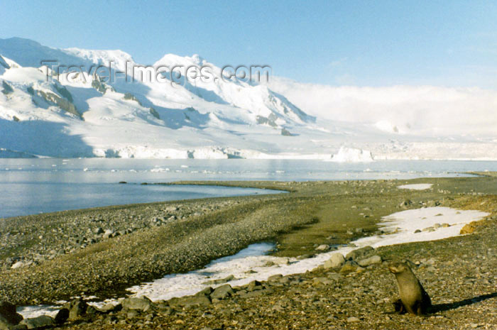 antarctica10: Trinity Island, Palmer Archipelago, Antarctica: Mikkelson harbor - beach and seal - photo by G.Frysinger - (c) Travel-Images.com - Stock Photography agency - Image Bank