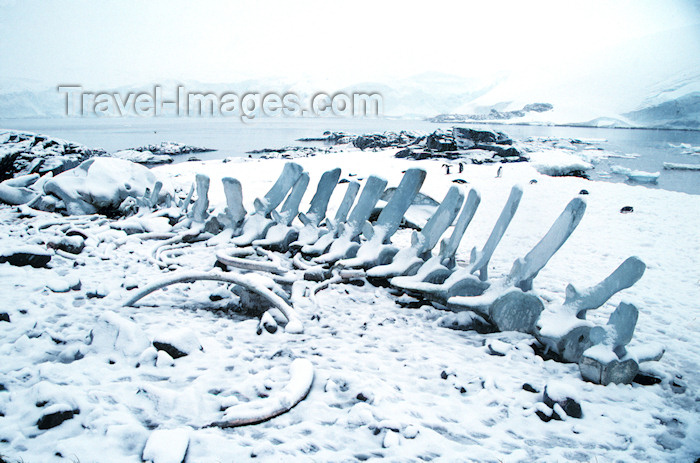 antarctica12: Port Lockroy, Wiencke Island, Antarctica: whale's skeleton - photo by R.Eime - (c) Travel-Images.com - Stock Photography agency - Image Bank