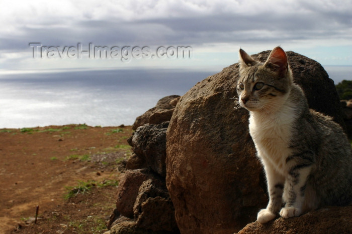 argentina122: Argentina - Puerto Madryn - Patagonia Argentina - Valdez Peninsula: cat and the South Atlantic - gato (photo by N.Cabana) - (c) Travel-Images.com - Stock Photography agency - Image Bank