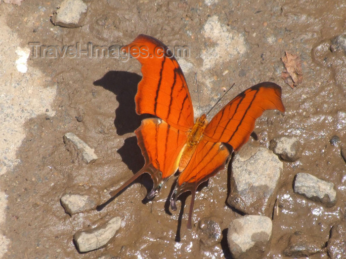 argentina216: Argentina - Iguazu Falls - butterfly at the falls - images of South America by M.Bergsma - (c) Travel-Images.com - Stock Photography agency - Image Bank