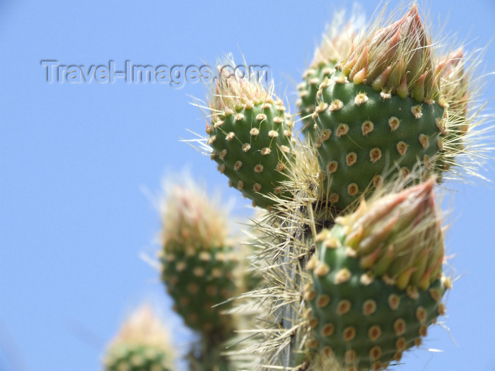 argentina250: Argentina - Salta - Cactus at Cerro San Bernardo - images of South America by M.Bergsma - (c) Travel-Images.com - Stock Photography agency - Image Bank