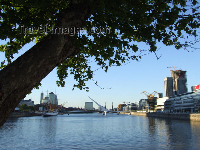 argentina348: Argentina - Buenos Aires - Puerto Madero - tree - images of South America by M.Bergsma - (c) Travel-Images.com - Stock Photography agency - Image Bank