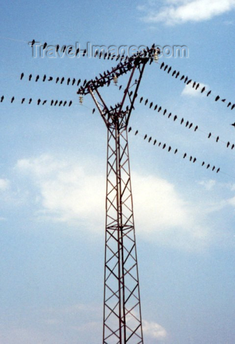armenia51: Armenia - Marmashen: birds of a feather flock together - crows on the power lines - pylon - photo by M.Torres - (c) Travel-Images.com - Stock Photography agency - Image Bank
