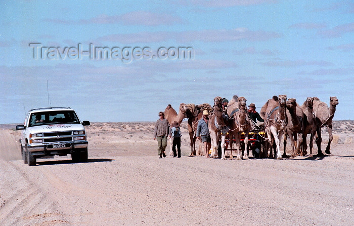 australia379: Australia - Oodnadatta Track (SA): the old and the new - a modern 4WD passes a group of camels - photo by Rod Eime - (c) Travel-Images.com - Stock Photography agency - Image Bank