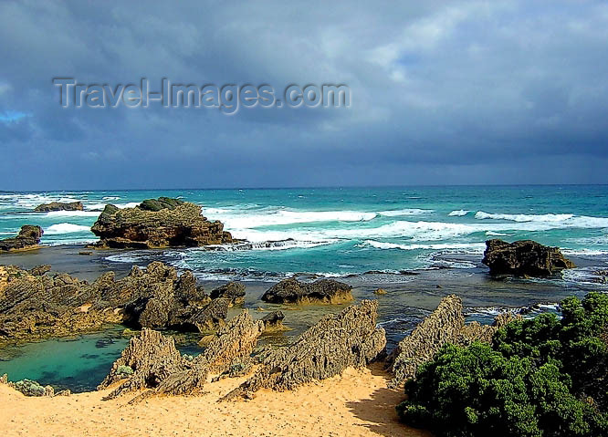 australia455: Australia - Port Fairy (Victoria): the Crags Calcified Forest - photo by Luca Dal Bo - (c) Travel-Images.com - Stock Photography agency - Image Bank