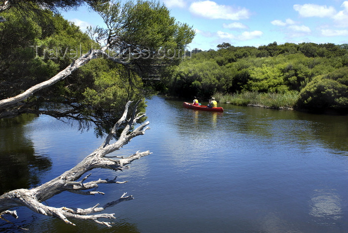 australia653: Australia - Hindmarsh River, South Australia: canoeing - photo by G.Scheer - (c) Travel-Images.com - Stock Photography agency - Image Bank