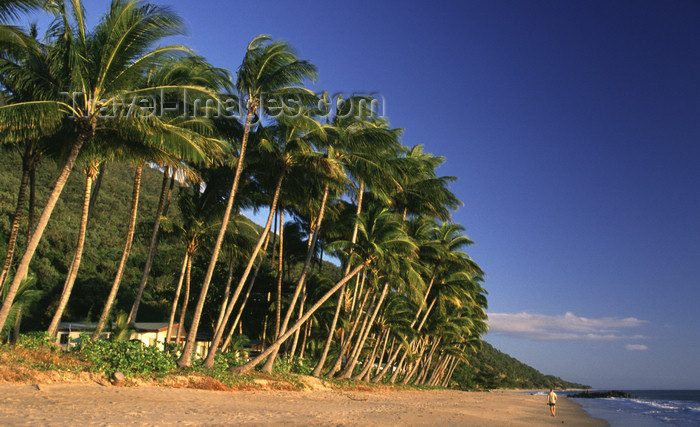 australia722: Cairns, Queensland, Australia - coconut trees - photo by Y.Xu - (c) Travel-Images.com - Stock Photography agency - Image Bank