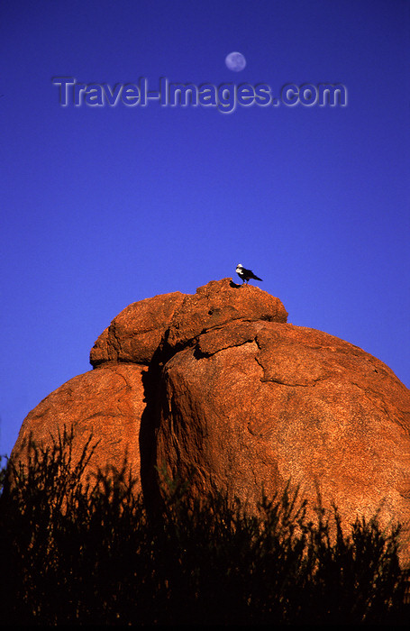 australia735: Devil's Marbles Conservation Reserve, NT, Australia: boulders and bird - photo by Y.Xu - (c) Travel-Images.com - Stock Photography agency - Image Bank