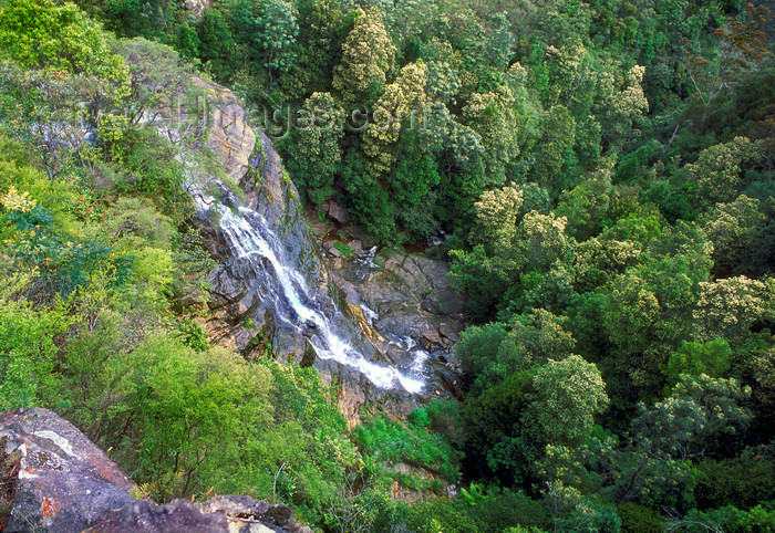 australia745: Blue Mountains, New South Wales, Australia: rainforest near Wentworth Falls - photo by G.Scheer - (c) Travel-Images.com - Stock Photography agency - Image Bank