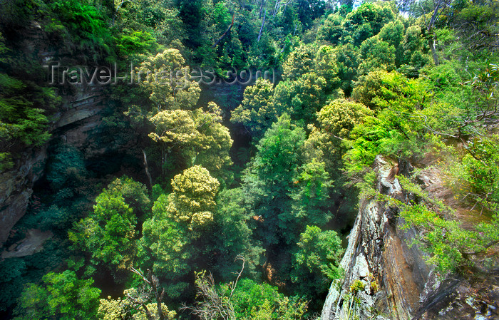 australia746: Blue Mountain, New South Wales, Australia: rainforest from above, Blue Mountains National Park - photo by G.Scheer - (c) Travel-Images.com - Stock Photography agency - Image Bank