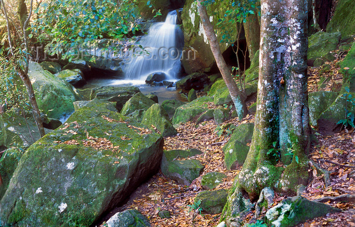 australia750: Blue Mountains, New South Wales, Australia: waterfall, near Katoomba - photo by G.Scheer - (c) Travel-Images.com - Stock Photography agency - Image Bank