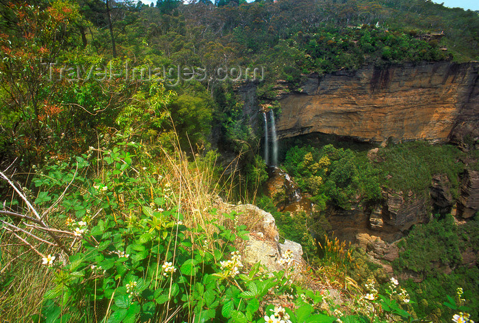 australia754: Blue Mountains, New South Wales, Australia: Wentworth Falls from above - Blue Mountains National Park - photo by G.Scheer - (c) Travel-Images.com - Stock Photography agency - Image Bank