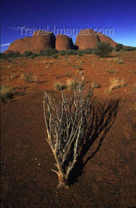australia76: The Olgas / Kata Tjuta, NT, Australia: domed rock formations - Uluru-Kata Tjuta National Park - photo by Y.Xu - (c) Travel-Images.com - Stock Photography agency - Image Bank
