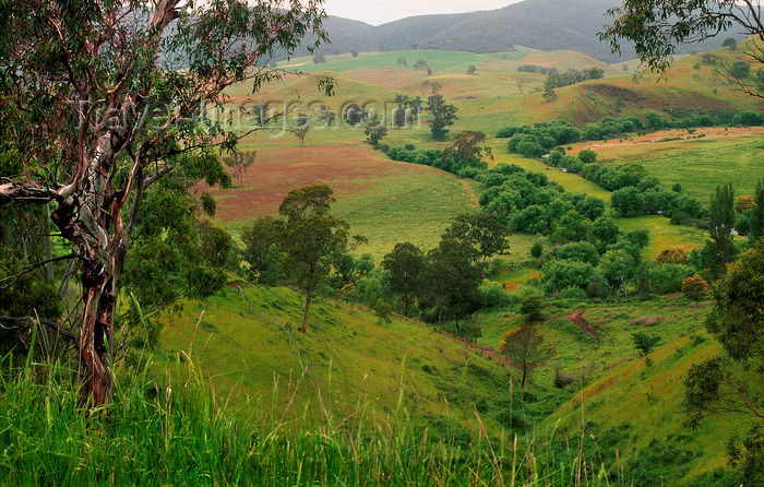 australia763: Gippsland , Victoria, Australia: landscape - photo by G.Scheer - (c) Travel-Images.com - Stock Photography agency - Image Bank