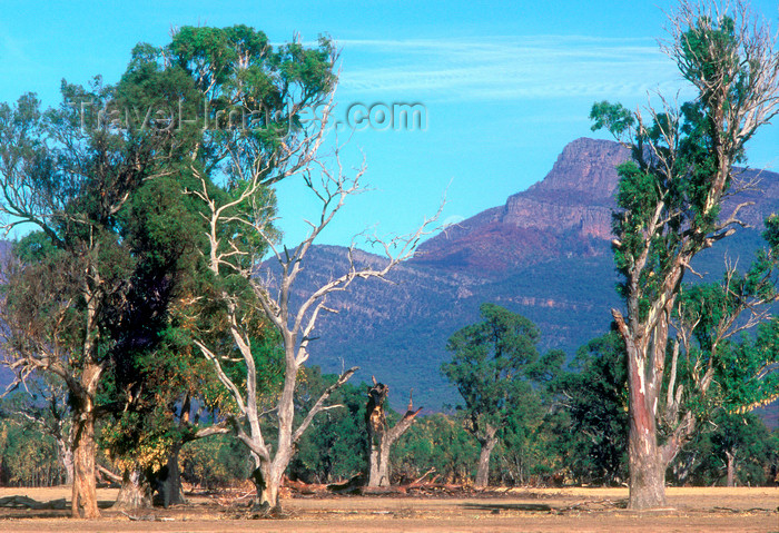 australia772: Grampians National Park, Victoria, Australia: Victoria Valley - eucalypti - photo by G.Scheer - (c) Travel-Images.com - Stock Photography agency - Image Bank