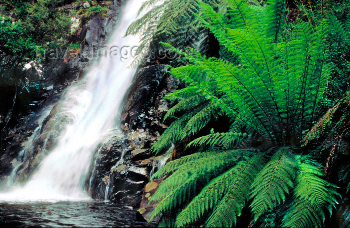 australia796: Marysville , Victoria, Australia: Steavensons Falls - photo by G.Scheer - (c) Travel-Images.com - Stock Photography agency - Image Bank