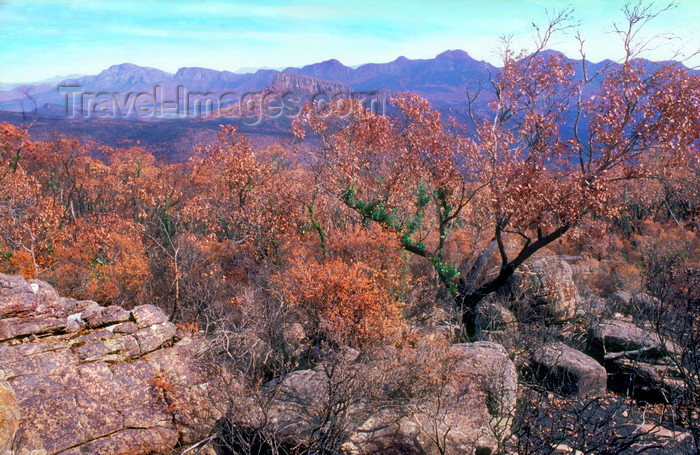 australia804: Grampians National Park, Victoria, Australia: view over the park from Mt. William - photo by G.Scheer - (c) Travel-Images.com - Stock Photography agency - Image Bank