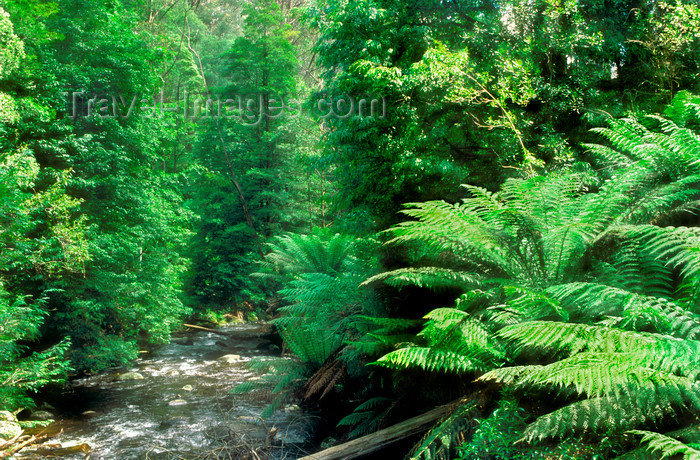australia809: Yarra Ranges, Victoria, Australia: Yarra Ranges forest and sream - photo by G.Scheer - (c) Travel-Images.com - Stock Photography agency - Image Bank