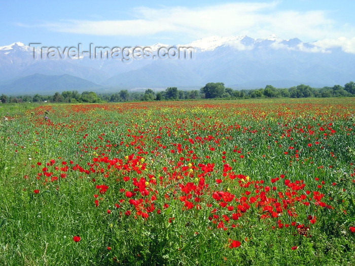 azer250: Azerbaijan - road to Sheki: mountains and poppies (photo by F.MacLachlan) - (c) Travel-Images.com - Stock Photography agency - Image Bank
