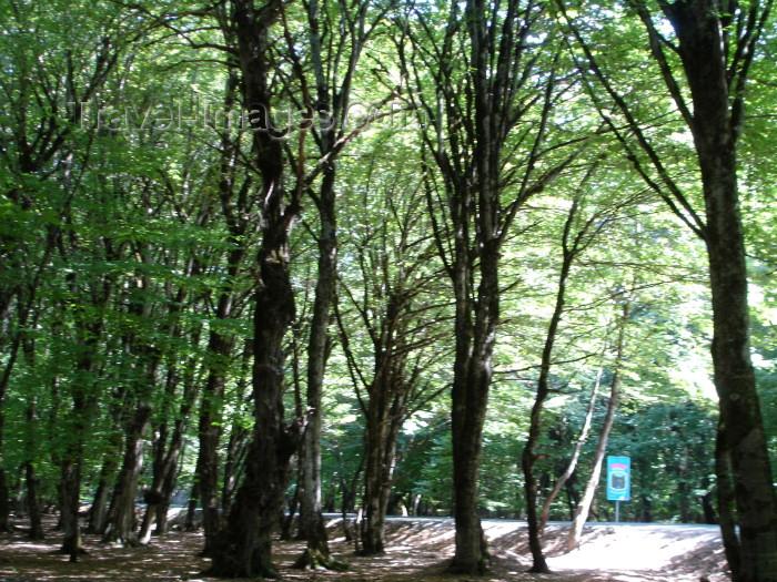 azer261: Azerbaijan - Sheki: woods - forest - trees (photo by R.Khalilov) - (c) Travel-Images.com - Stock Photography agency - Image Bank