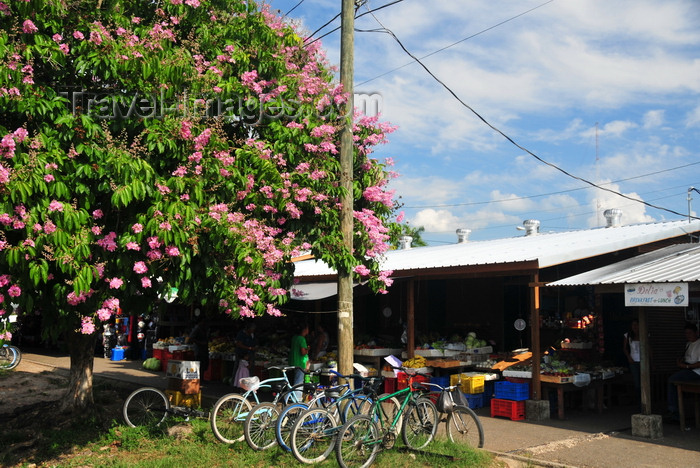 belize11: Belmopan, Cayo, Belize: market square - stalls, bikes and flowering tree - photo by M.Torres - (c) Travel-Images.com - Stock Photography agency - Image Bank