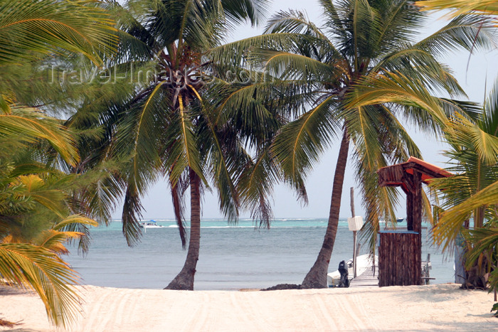 belize49: Belize - Seine Bight village: path to the Caribbean Sea - white sand beach with coconut trees - playa - plage - praia - Strand - photo by Charles Palacio - (c) Travel-Images.com - Stock Photography agency - Image Bank