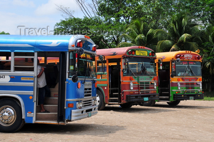 belize87: San Ignacio, Cayo, Belize: transportation to Spanish Lookout, a Mennonite town - Blue Bird buses - photo by M.Torres - (c) Travel-Images.com - Stock Photography agency - Image Bank