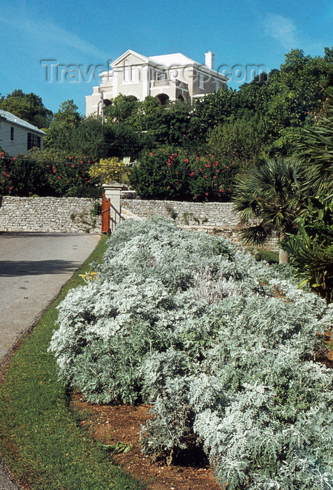bermuda4: Bermuda - Hamilton: white roof - in Bermuda roofs are often limed pure water collection from the rains - photo by G.Frysinger - (c) Travel-Images.com - Stock Photography agency - Image Bank