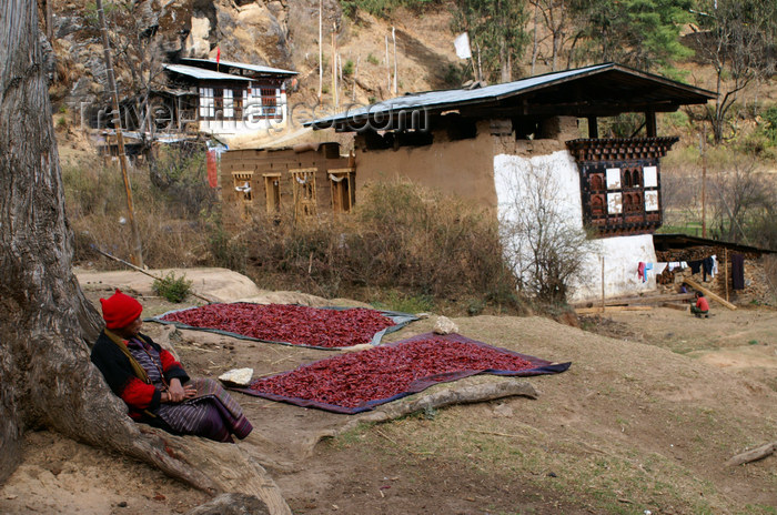 bhutan114: Bhutan - Paro dzongkhag - Drukgyel village - old woman, waiting for red chili peppers to dry - photo by A.Ferrari - (c) Travel-Images.com - Stock Photography agency - Image Bank
