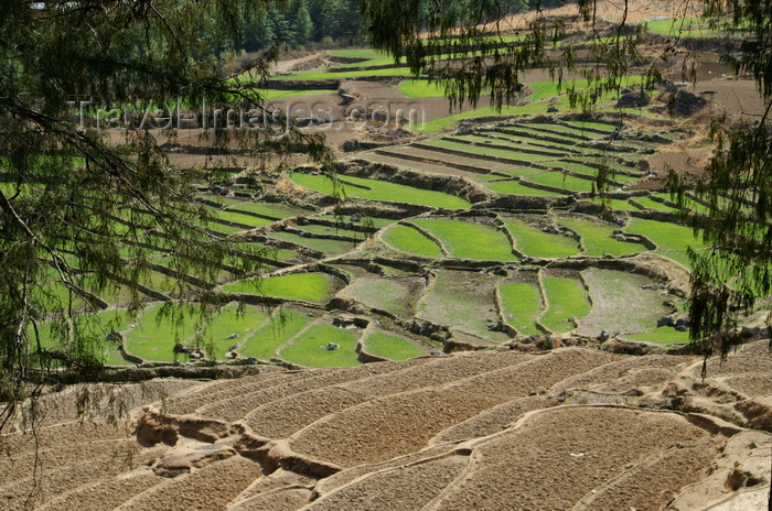 bhutan119: Bhutan - Paro dzongkhag - Drukgyel village - rice fields near the village - Paddy fields - photo by A.Ferrari - (c) Travel-Images.com - Stock Photography agency - Image Bank