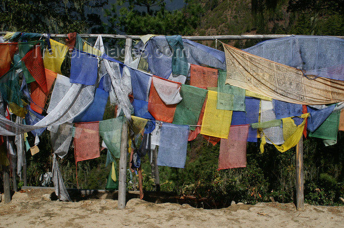 bhutan124: Bhutan - Paro dzongkhag - lines of prayer flags, on the way to Taktshang Goemba - photo by A.Ferrari - (c) Travel-Images.com - Stock Photography agency - Image Bank