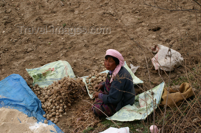 bhutan14: Bhutan - Bumthang valley - woman cleaning potatoes - working in the fields, outside Kurjey Lhakhang - photo by A.Ferrari - (c) Travel-Images.com - Stock Photography agency - Image Bank