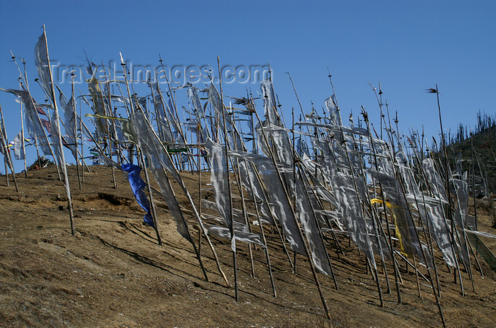 bhutan166: Bhutan - Prayer flags, blown by the wind, at Chele La - photo by A.Ferrari - (c) Travel-Images.com - Stock Photography agency - Image Bank